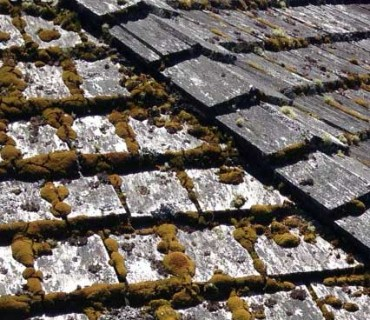 Vancouver Cedar Roof Cleaning