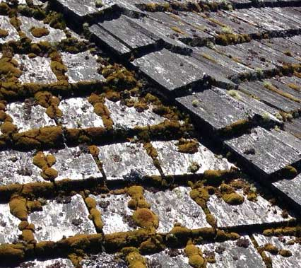 Vancouver Cedar Roof Cleaning West Coast Moss Removal