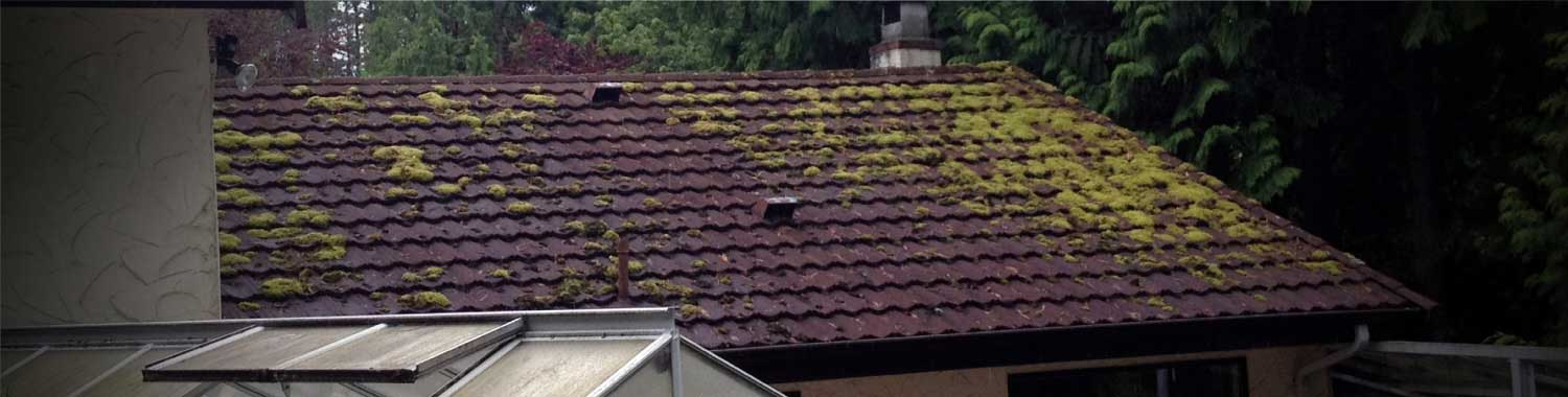 Vancouver Roof Cleaning Before