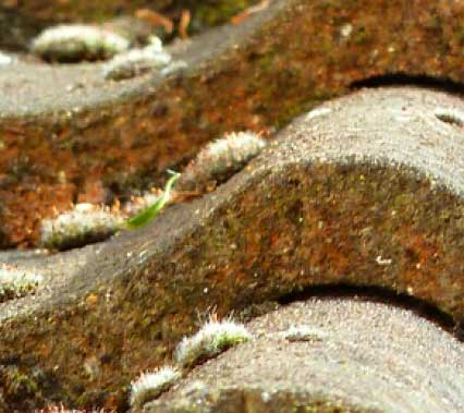 how to clean moss from asphalt roof